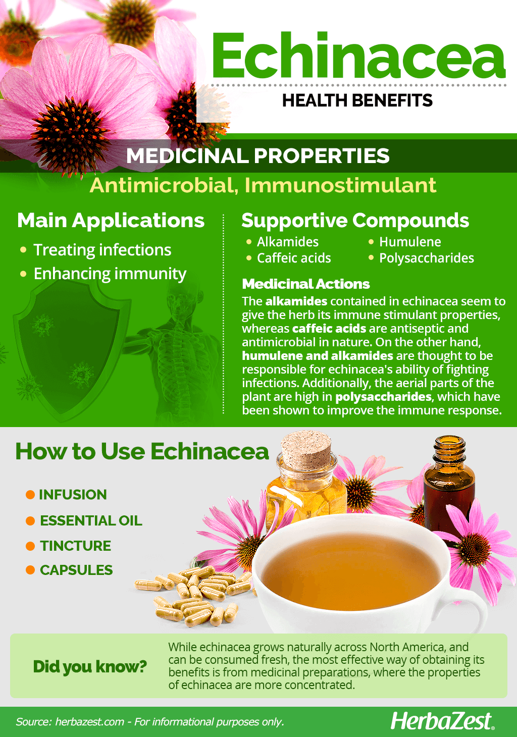 All About Echinacea