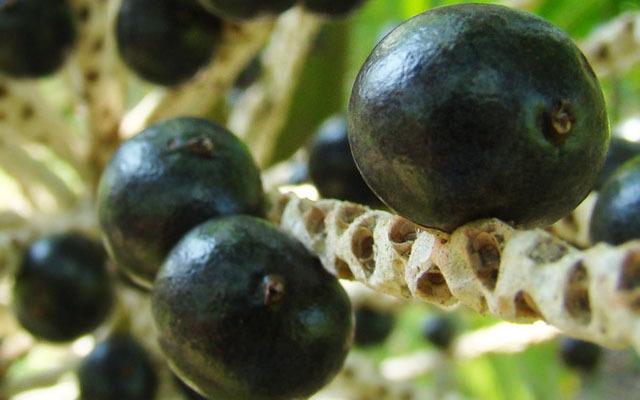 New Study: Acai Increases Antioxidant Capacity