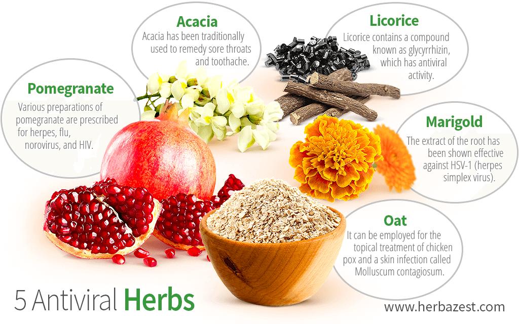 5 Antiviral Herbs