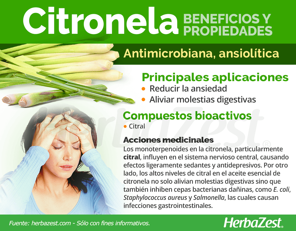 Beneficios y propiedades de la citronela