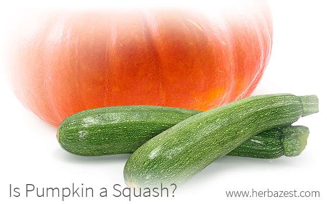 Is Pumpkin a Squash?