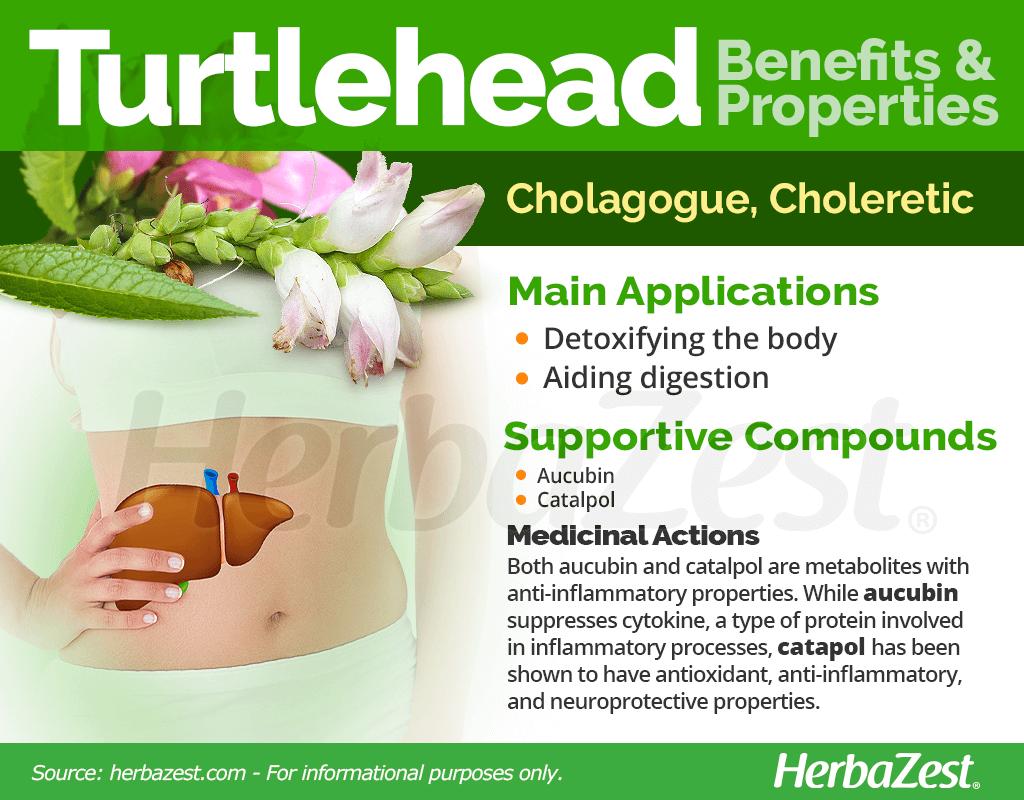 Turtlehead Benefits and Properties