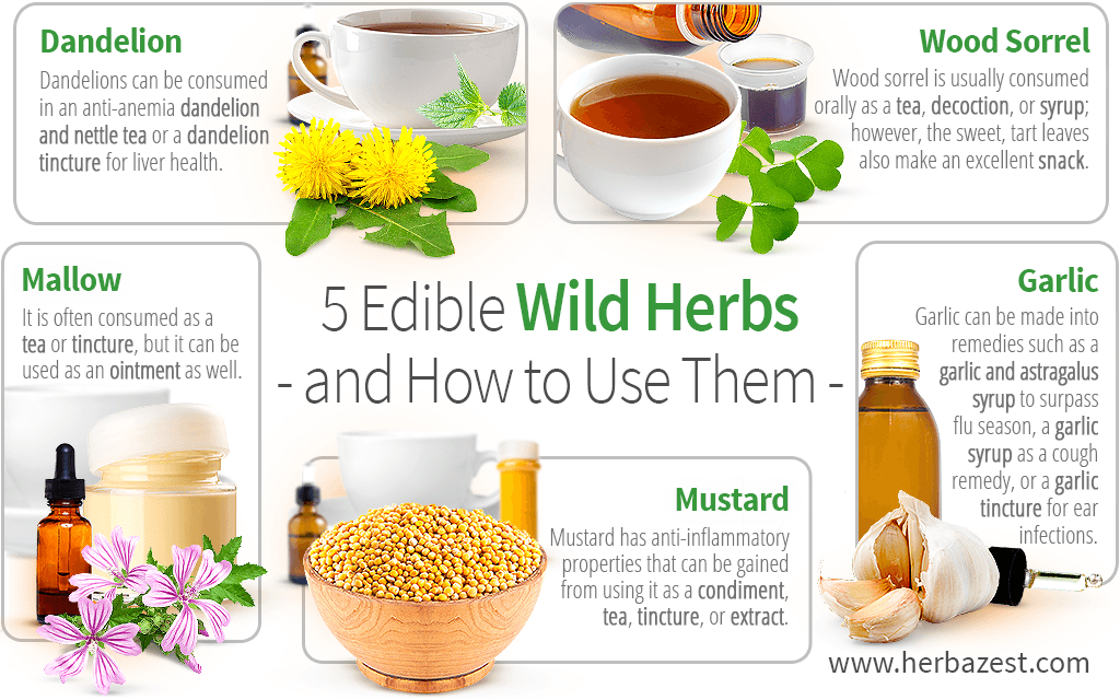 5 Edible Wild Herbs and How to Use Them