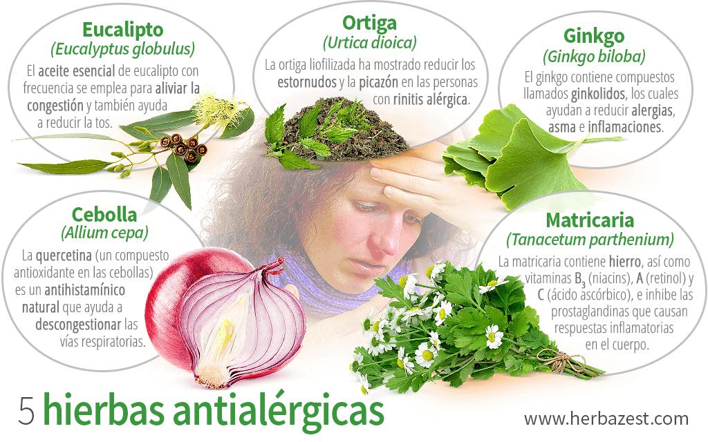 5 hierbas antialérgicas