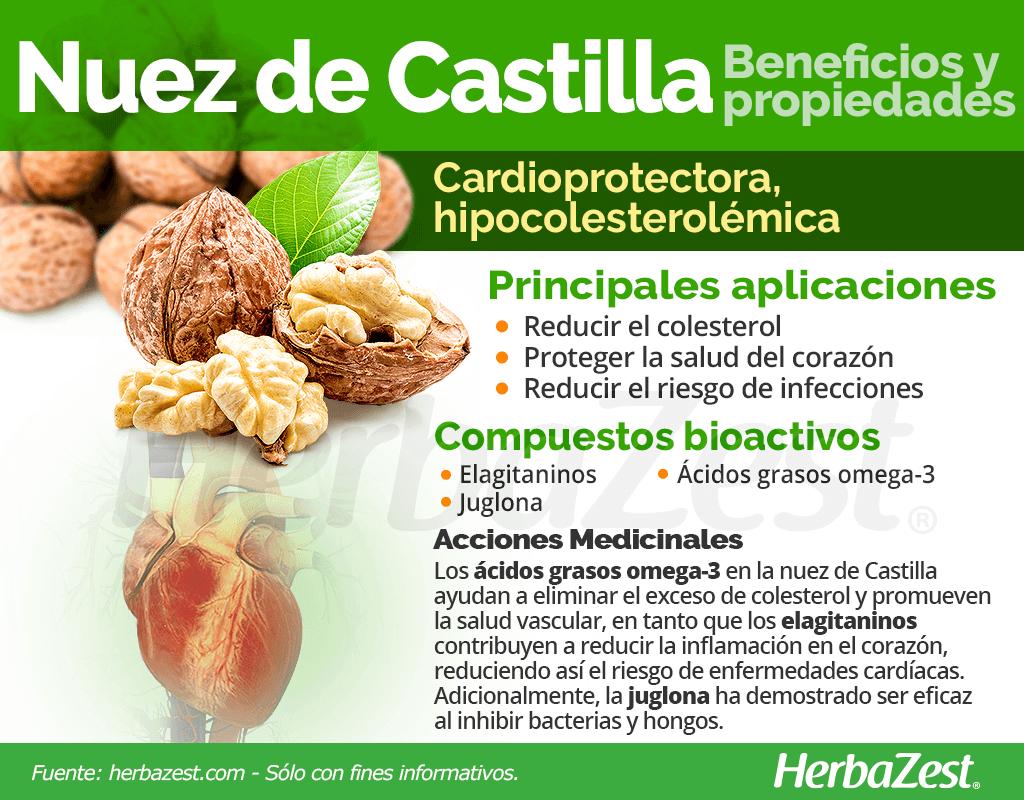 Beneficios y propiedades de la nuez de Castilla
