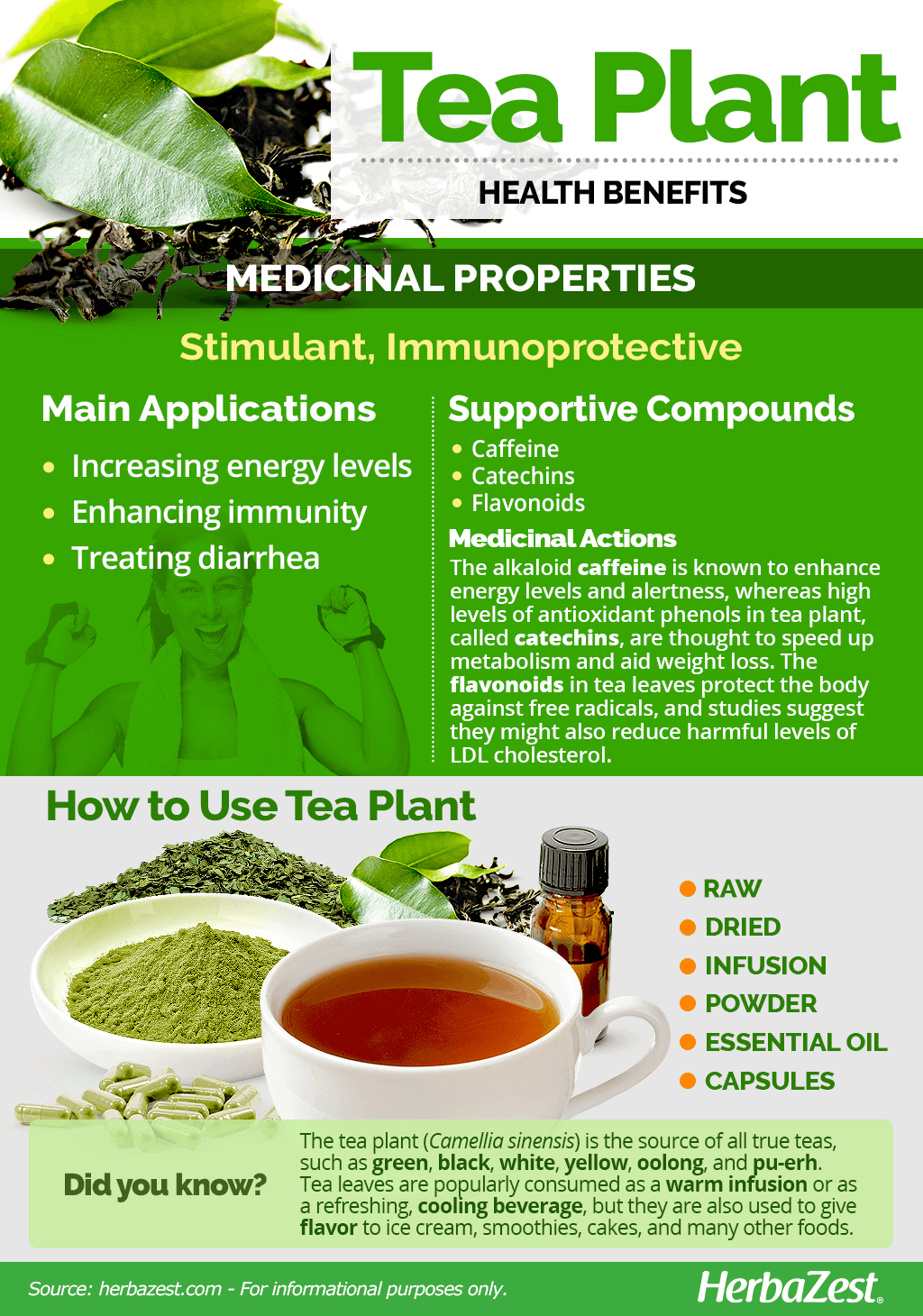All About Tea Plant