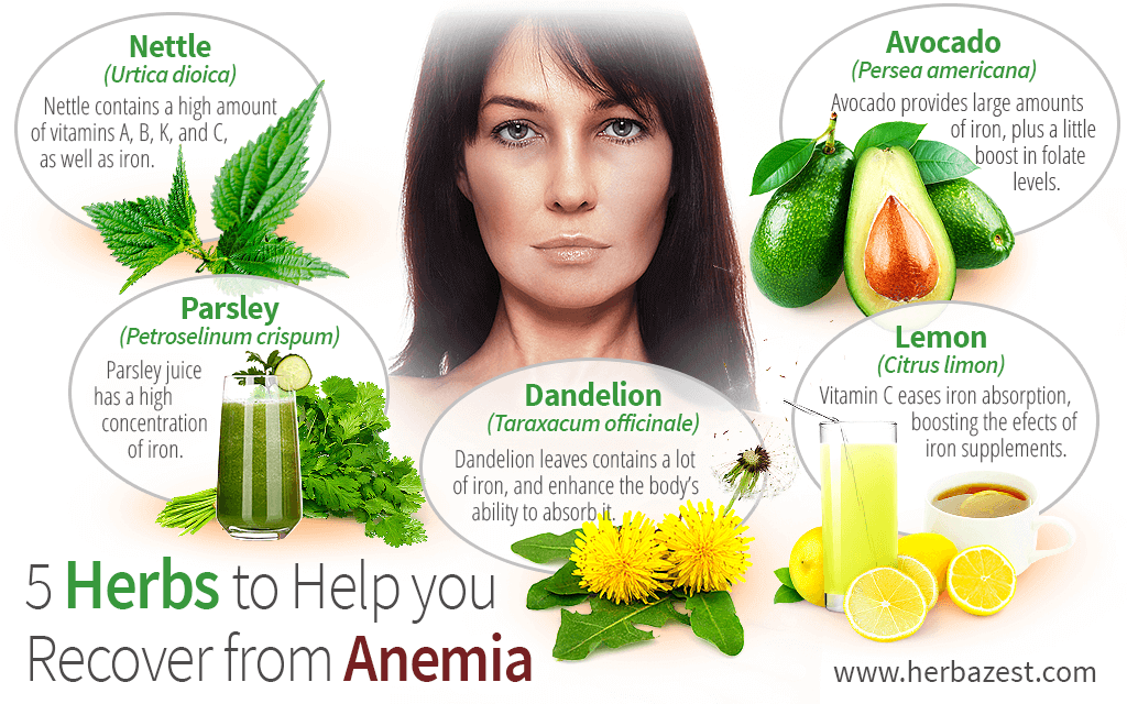 5 Herbs To Help You Recover From Anemia Herbazest