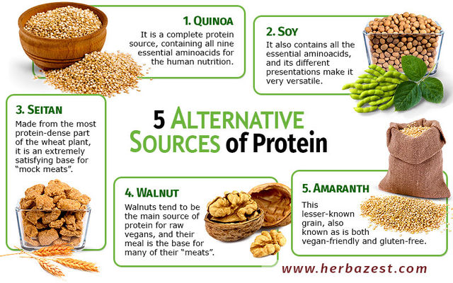 Provide Examples Of Foods High In Protein
