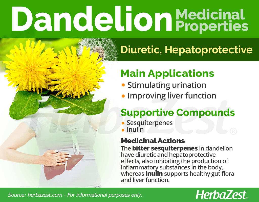 Dandelion Benefits & Properties