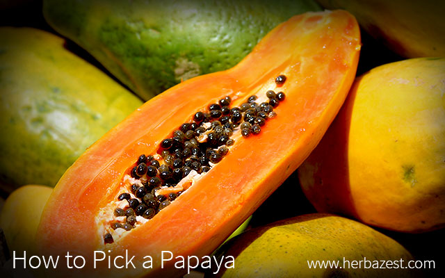 How to Pick a Papaya