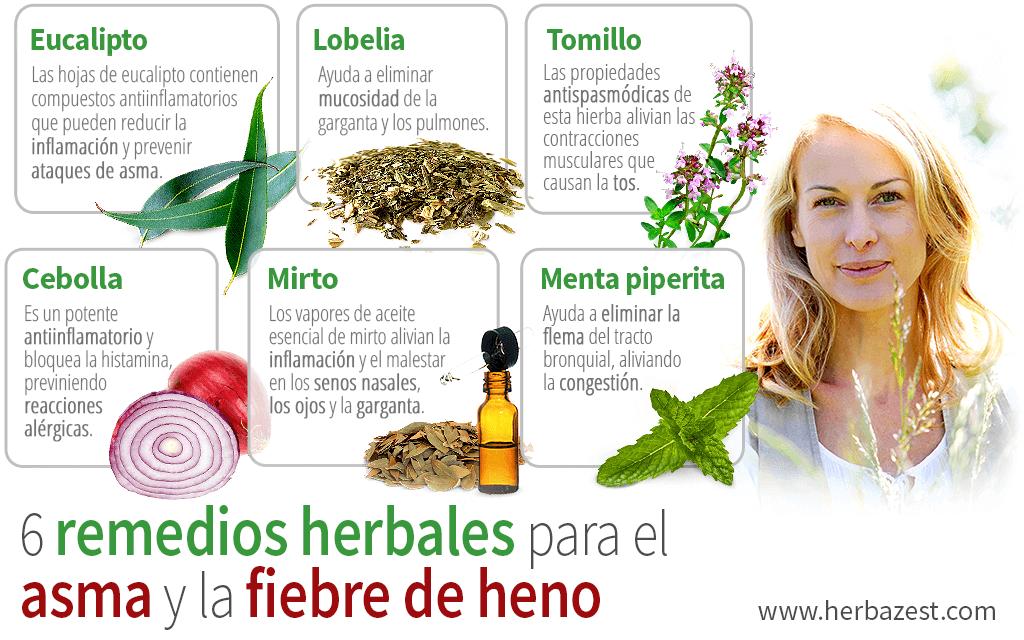 6 remedios herbales para el asma y la fiebre de heno