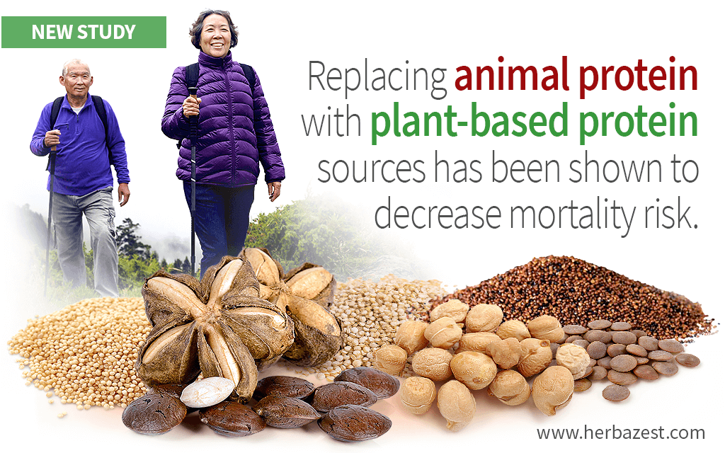 Plant-Based Protein May Increase Longevity