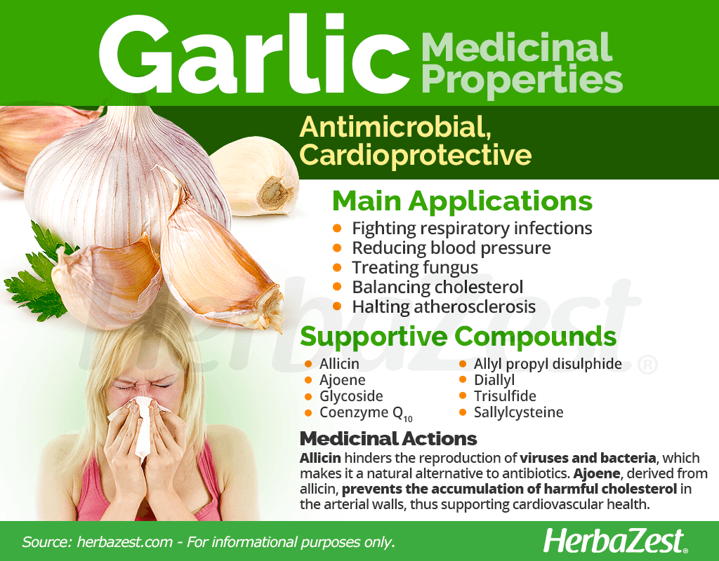 Garlic Medicinal Properties
