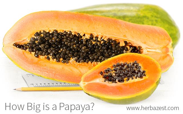 How Big is a Papaya?