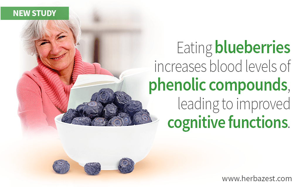 Blueberries' Phenolic Compounds Can Boost Cognition in Older Adults