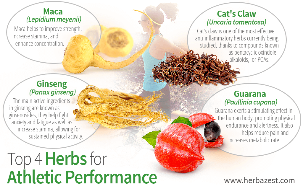 Top 4 Herbs for Athletic Performance