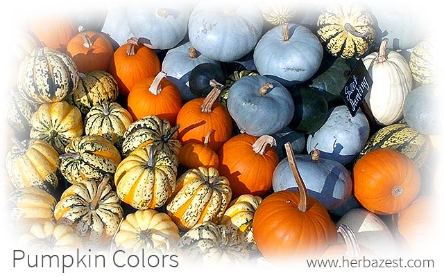 Pumpkin Colors