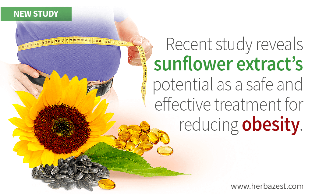 Sunflower Seed Extract May Help Reduce Obesity