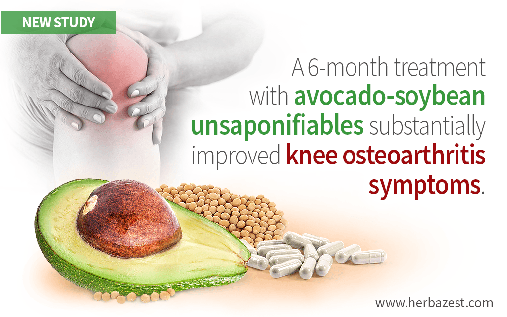 Avocado-Soybean Unsaponifiable Capsules Beneficial for Knee Pain