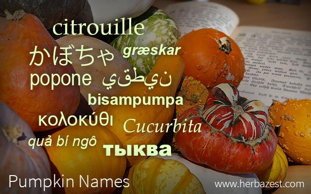 Pumpkin Names