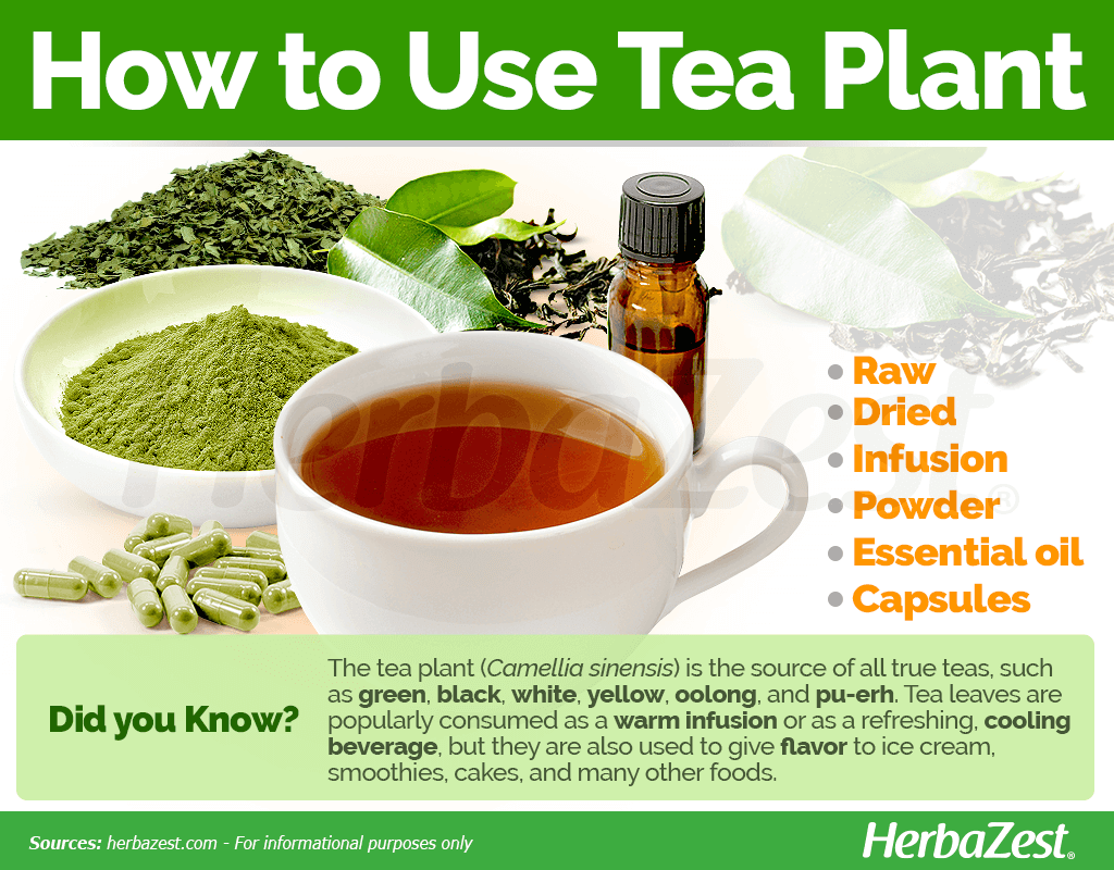 How to Use Tea Plant