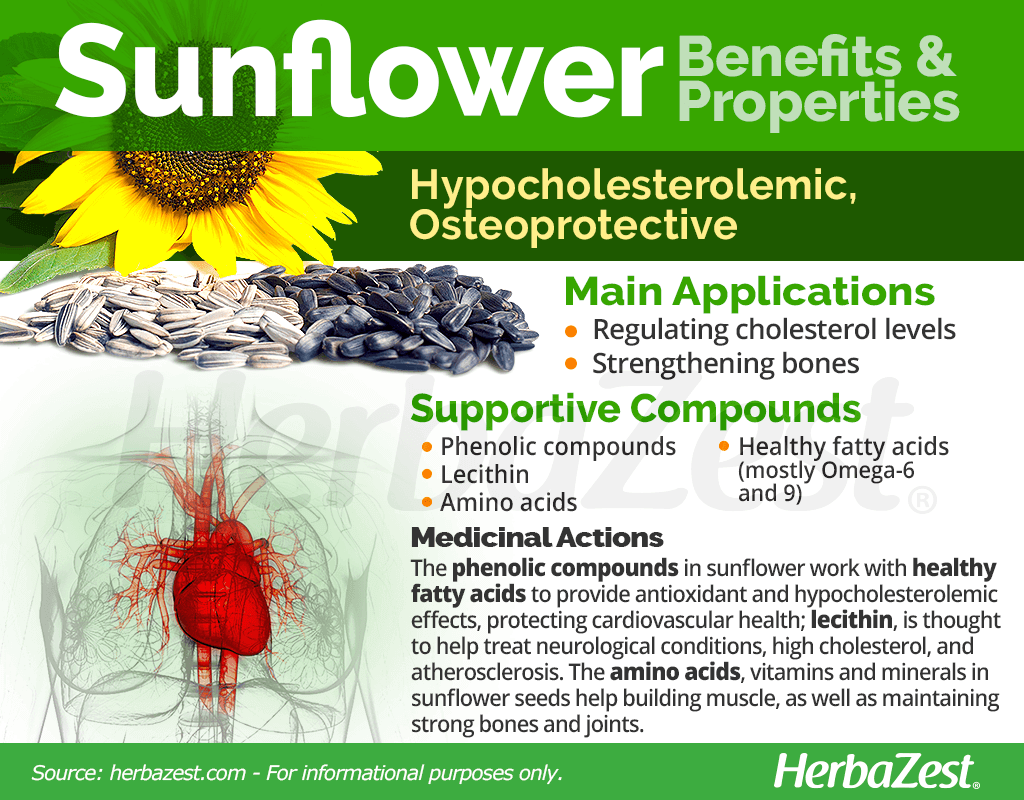 Sunflower Benefits and Properties