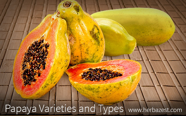 Papaya Varieties and Types