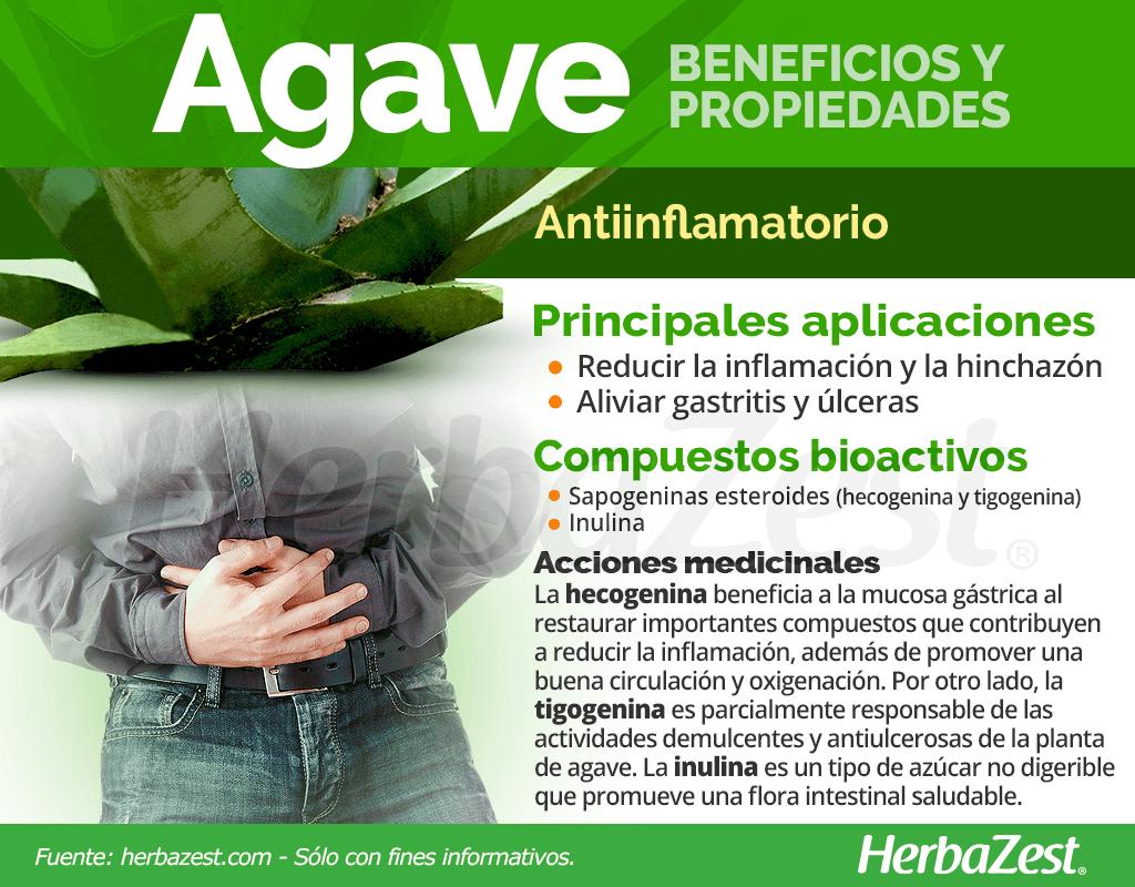Beneficios y propiedades del agave