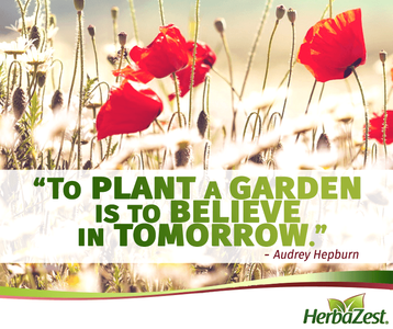 Quote: To Plant a Garden is to Believe in Tomorrow