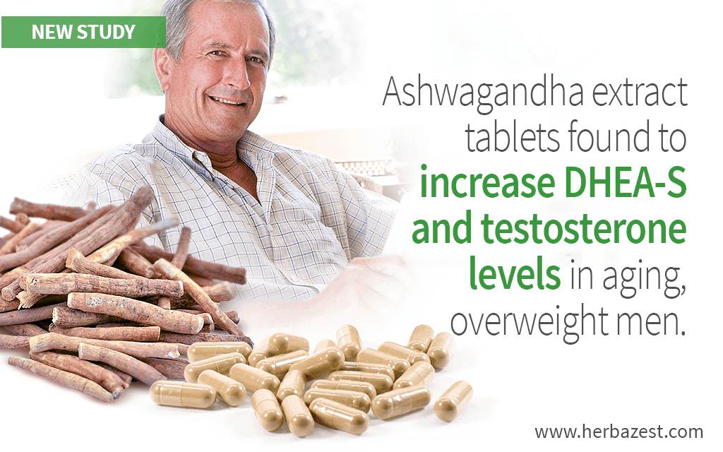 Ashwagandha Extract Increases Androgen Levels in Aging, Overweight Men