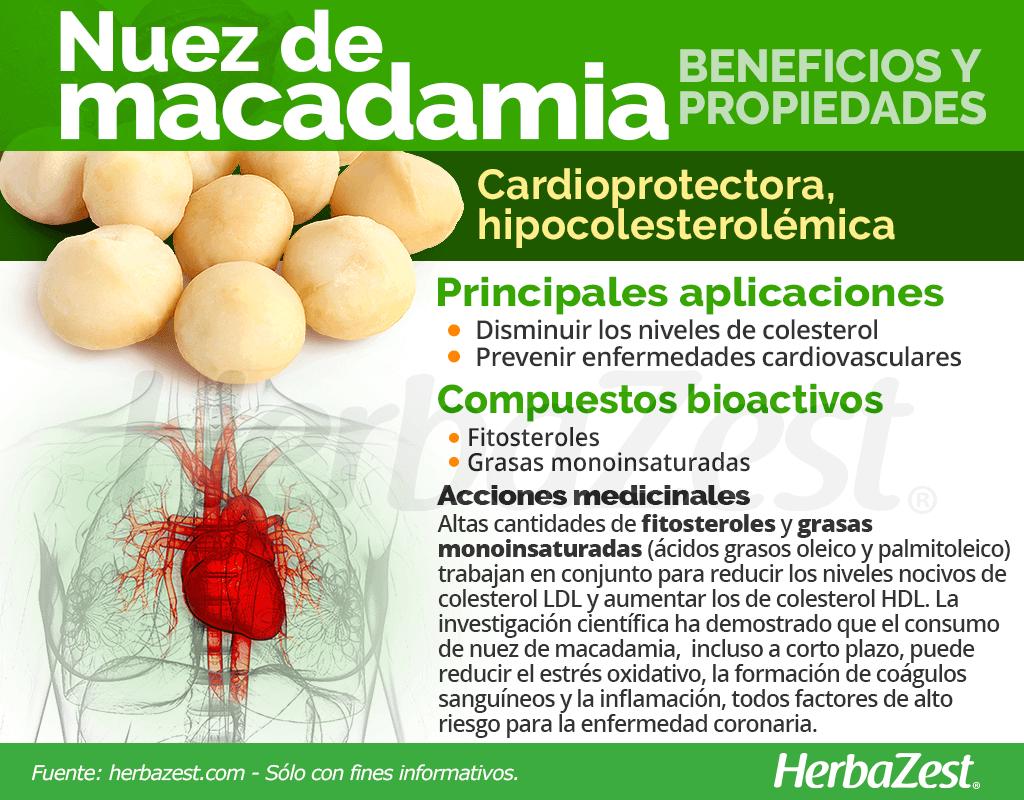 Beneficios y propiedades de la nuez de macadamia