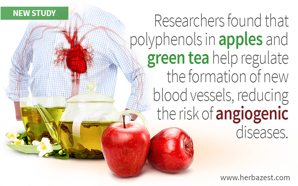 Researchers found that polyphenols in apples and green tea help regulate the formation of new blood vessels, reducing the risk of angiogenic diseases.