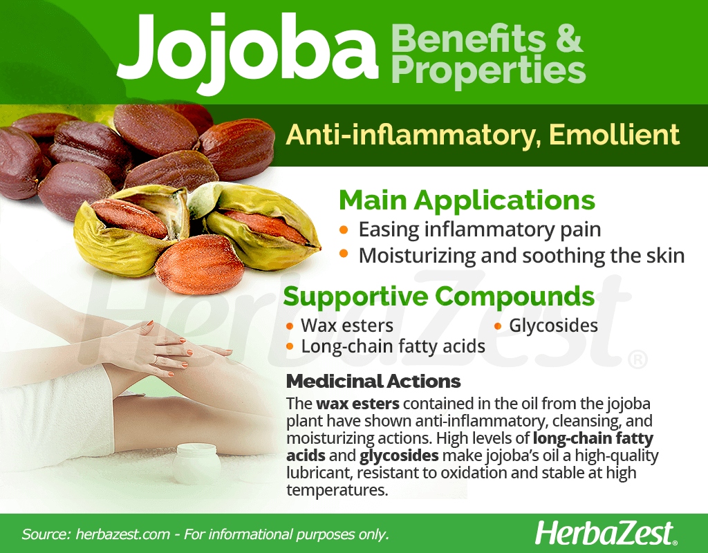 Jojoba Benefits and Properties