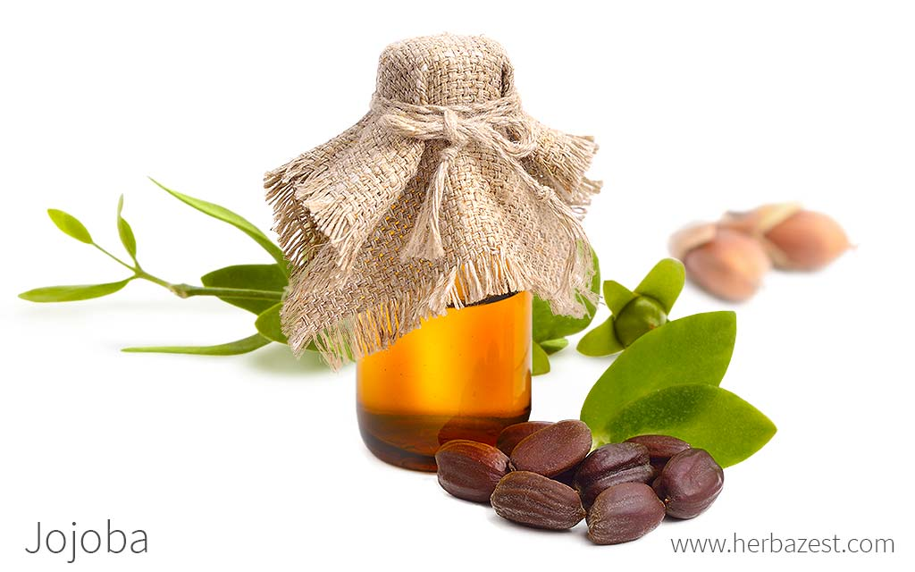 An Overview of the Jojoba Oil