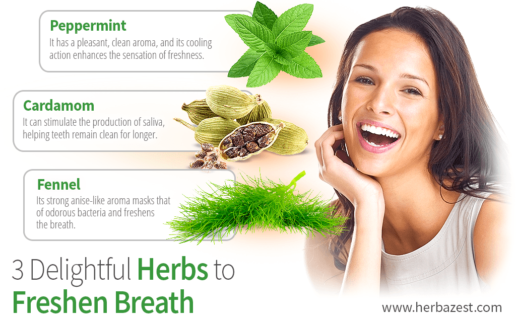 3 Delightful Herbs to Freshen Breath