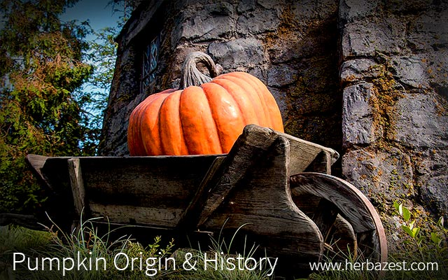 Pumpkin Origin & History