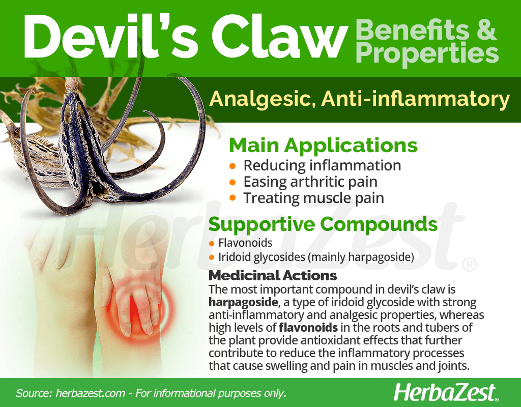 Devil's Claw Benefits and Properties