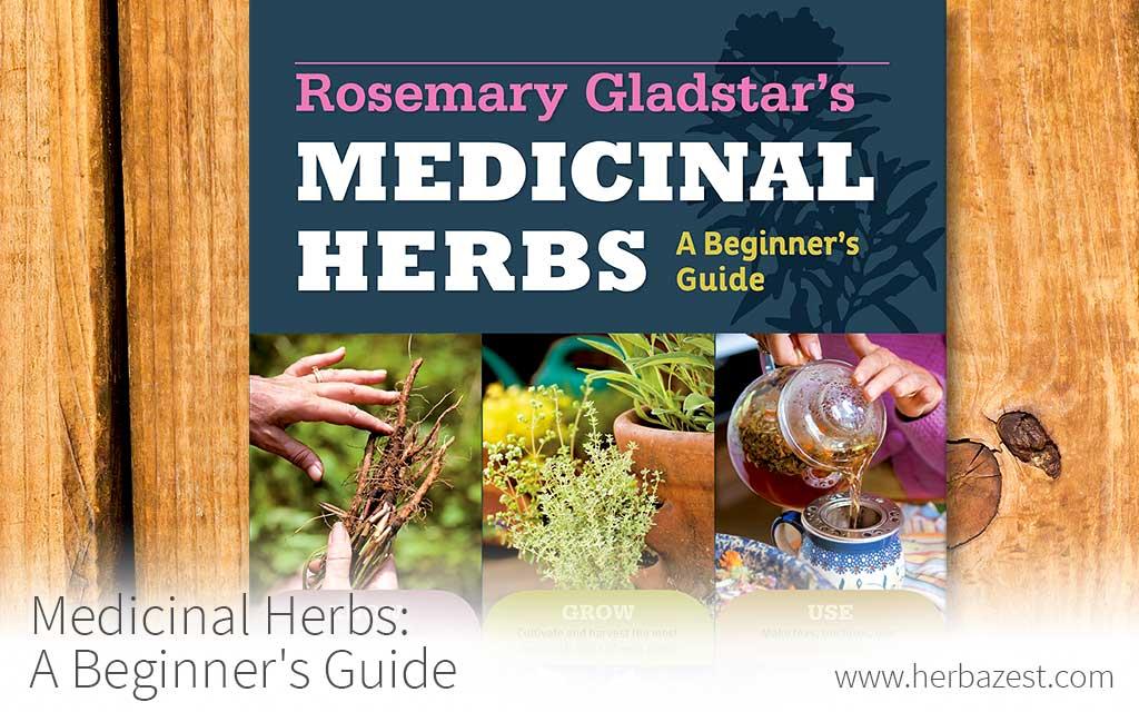 Medicinal Herbs: A Beginner's Guide