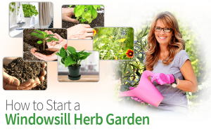 How to Start a Windowsill Herb Garden
