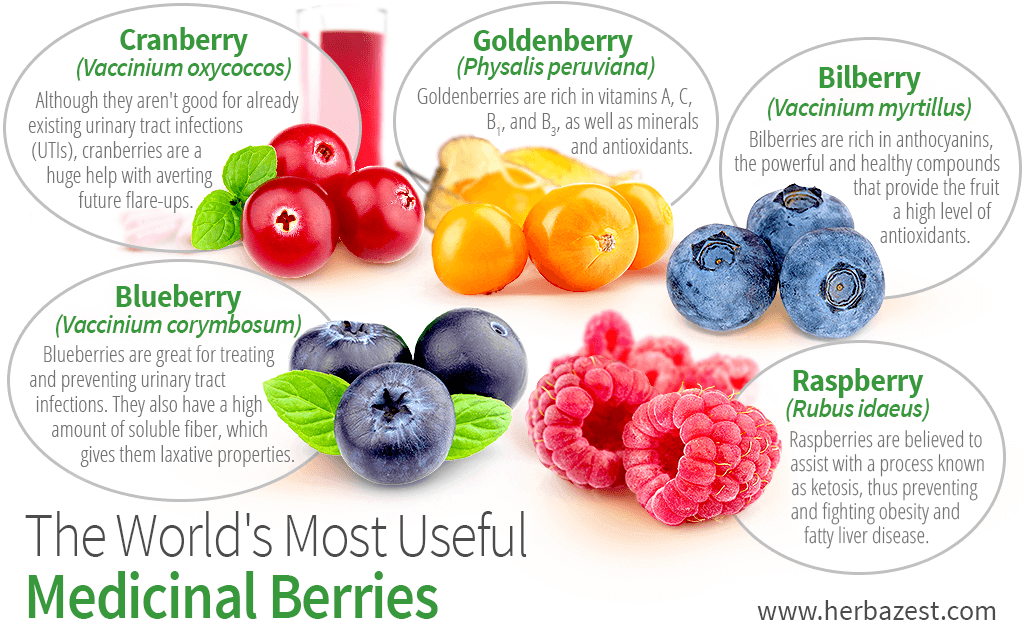 The World's Most Useful Medicinal Berries